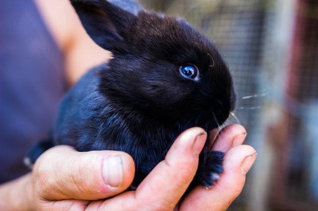 Co powinien jeść królik